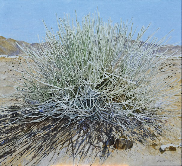LEIGH VOIGT, CADABA APHYLLA, LEAFLESS WORMBUSH, RICHTERSVELD OIL  ON CANVAS